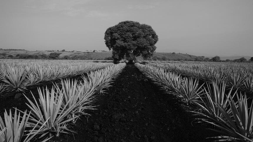 Tequila Terroir