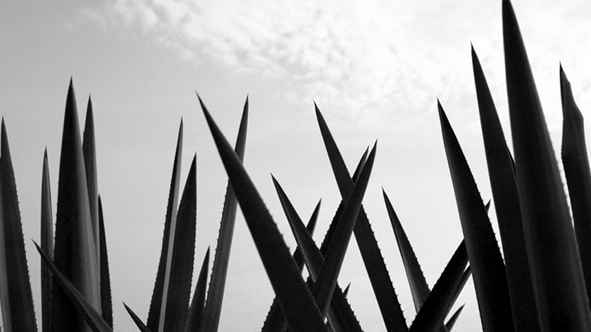Pure Essence of Agave
