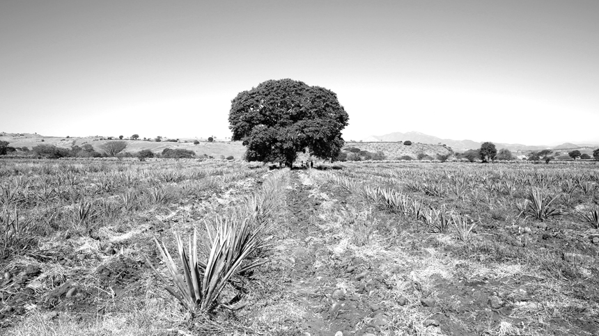 Casa_Dragones_Volcanic_Soil