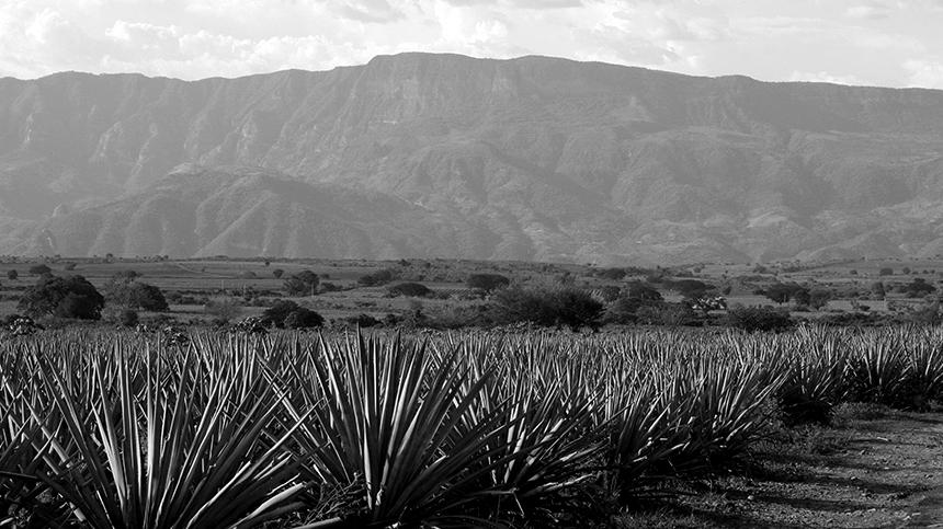 Casa_Dragones_Volcanic_Soil_2