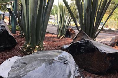 """""""Campos de los Dragones"""" at Mexico's Botanical Gardens"""