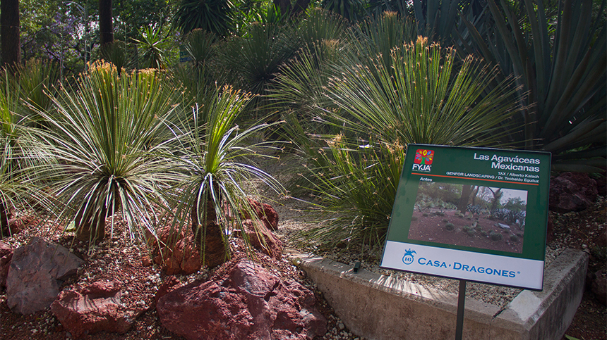 """Campos de los Dragones"" at Mexico's Botanical Gardens"