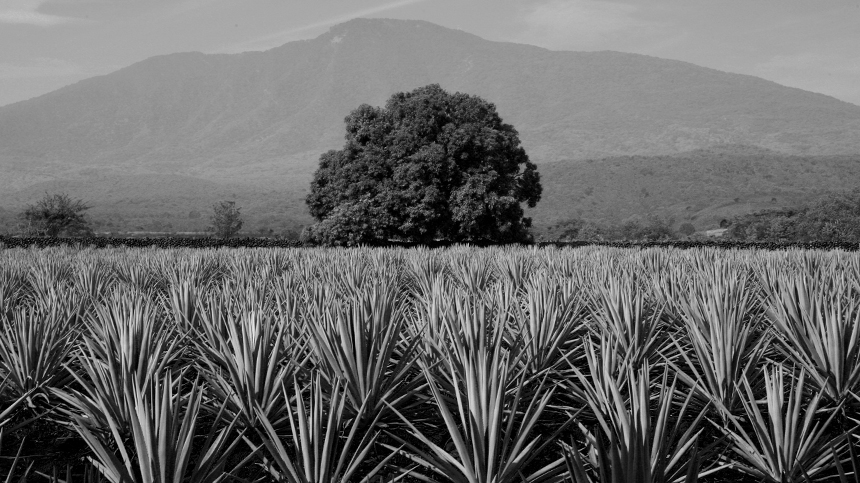 Casa_Dragones_Tequila_Terroir